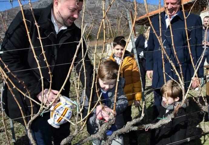 Orezani prvi čokoti u Carskim vinogradima kod porodice Vukoje