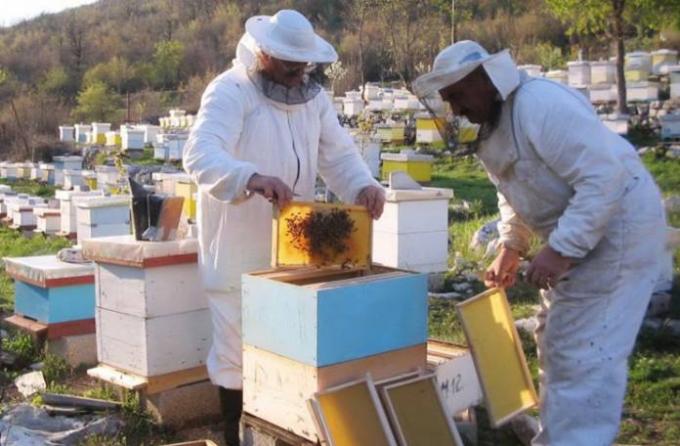Agrarni fond raspisao poziv za pomoć pčelarima
