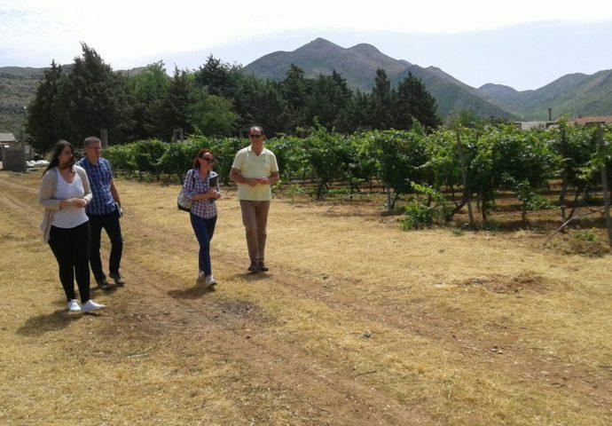 VIDEO: Agrofin i ove godine očekuje grožđe vrhunskog kvaliteta- stigao i koncesioni ugovor
