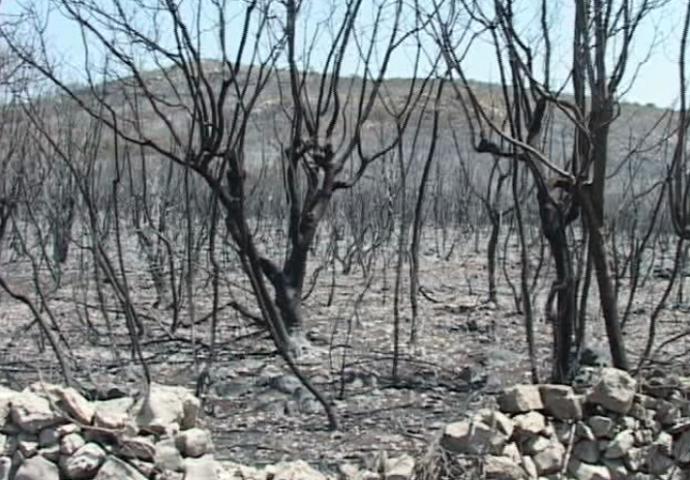 VIDEO: Ko je kriv za osam hiljada hektara spaljene Hercegovine?