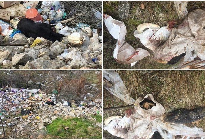 Stravičan prizor: Poubijali pse lutalice pa leševe pobacali po deponiji