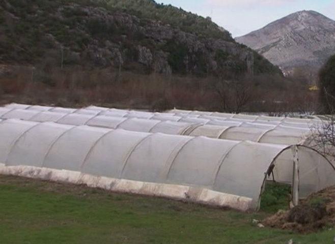 VIDEO: Poljoprivrednici zadovoljni radom Agrarnog fonda