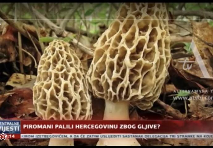 VIDEO: Piromani pale po Hercegovini zbog gljive