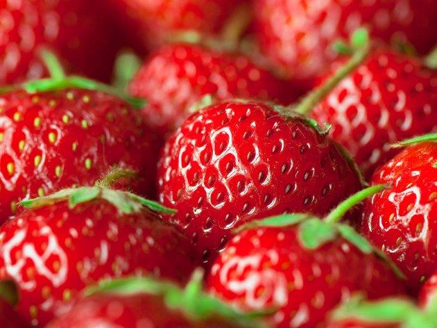 Berkovići jačaju proizvodnju jagoda- Zadruga ohrabrila poljoprivrednike