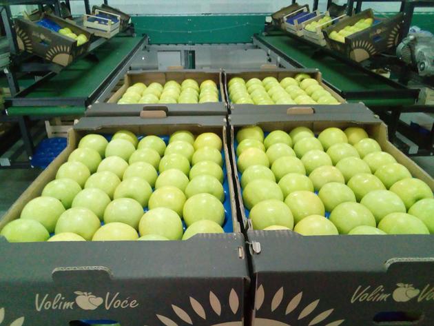 Jabuke iz Hercegovine stigle i do Maldiva – Na 340 hektara u Popovom polju gaje se najkvalitetnije voćne sorte