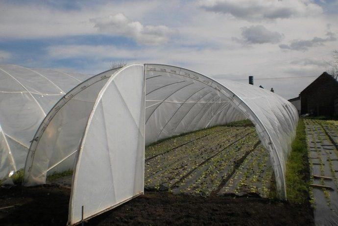U poljoprivredu uloženo 1.200.000  KM iz gradskog  budžeta