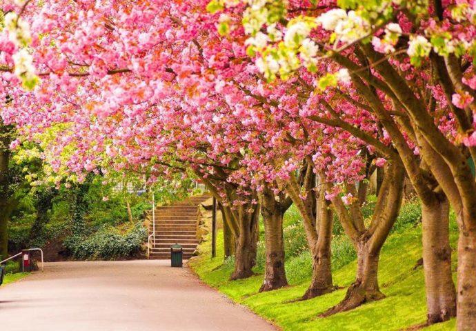 """Evo gdje je """"otišlo"""" proljeće"""