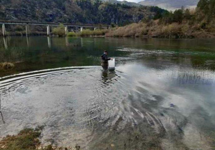Još jedna akcija poribljavanja Goričkog jezera iz HET-ovog mrijestilišta